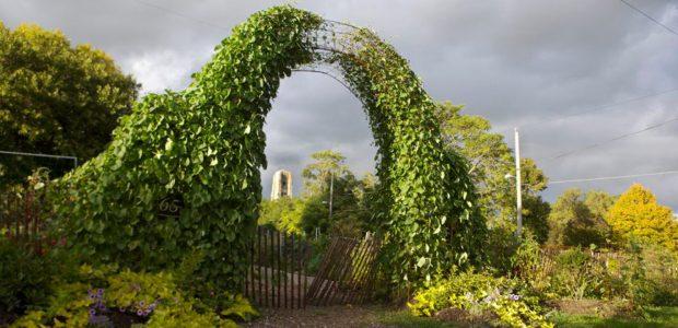 cropped-garden.jpg
